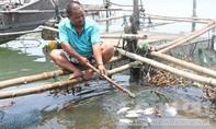 Môi trường, chất lượng nước đảm bảo nhưng cá vẫn chết