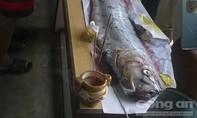 Phát hiện cá hố 'khủng' trôi trên biển, ngư dân mai táng theo phong tục