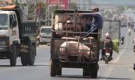 Trung Quốc ồ ạt thu mua heo khiến giá tăng vọt