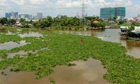 Lục bình bủa vây sông Sài Gòn