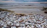 Sẽ công bố nguyên nhân cá chết ở miền Trung vào ngày 30-6