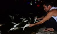 Cá chết trắng hồ giữa lòng Hà Nội