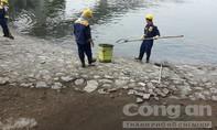 Truy tìm nguyên nhân hàng tấn cá chết tại hồ Hoàng Cầu
