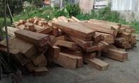 Gần 30 khối gỗ Pơ mu quý hiếm hàng trăm năm tuổi bị đốn hạ ở Quảng Nam