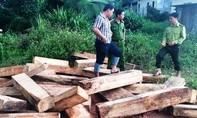 Thủ tướng yêu cầu điều tra vụ phá rừng pơ mu tại Quảng Nam