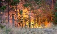 Bé trai 9 tuổi chết cháy trong lán tre vì lửa nấu cơm cháy lan