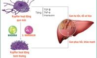 """Xơ gan và ung thư gan – """"đợi"""" chữa trị thì đã quá muộn"""