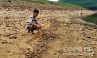 Cá chết hàng loạt ở hồ Phước Hà