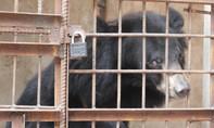 Tự nguyện trao trả động vật hoang dã nuôi trong nhà