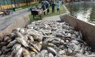 Cá chết 'trắng hồ' ở Công viên 29-3 do nguồn oxy hòa tan trong nước thấp