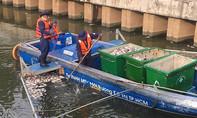 TP.HCM: 4 cơ quan khắc phục hiện tượng cá chết trên kênh Nhiêu Lộc