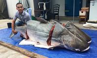 Cặp cá tra 'khủng' nặng hàng trăm ký từ Lào về Sài Gòn