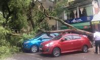 Cây xanh bất ngờ đổ gục đè 2 ô tô giữa phố