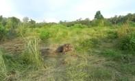 Phát hiện xác voi rừng 3 tháng tuổi đang phân hủy