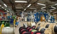 Bảo vệ công ty cắt trộm dây cáp điện bạc triệu đem bán 300.000 đồng