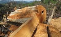 Cấp đất sai đối tượng khiến hàng chục hecta rừng bị phá: Trưởng phòng TN-MT bị kỷ luật Đảng