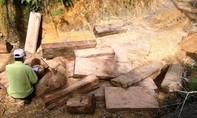 Phát hiện một bãi tập kết hơn 160 phách gỗ pơ mu
