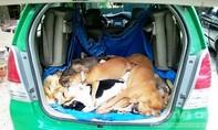 'Cẩu tặc' dùng taxi đi trộm chó