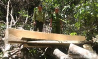 Ra quân đẩy lùi lâm tặc phá rừng phòng hộ