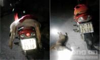 Bị phát hiện, nhóm 'cẩu tặc' bỏ lại xe máy trong rừng, tẩu thoát