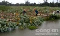 Nông dân dầm mưa thu hoạch nông sản