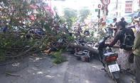 Nhánh cây gãy đè 3 người ở trung tâm Sài Gòn