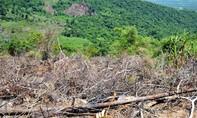Lén lút phá rừng phòng hộ để lấy đất trồng keo