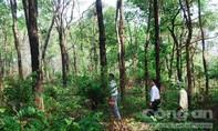 Một loạt cán bộ bị kiểm điểm và xử lý trách nhiệm liên quan đến rừng