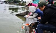 Người Hà Nội thả cá chép tiễn ông Táo về trời