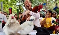 Năm Dậu bàn chuyện con gà thời 'toàn cầu hóa'
