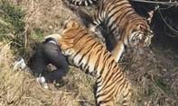Người đàn ông bị 3 con hổ tấn công trong sở thú