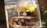 CSGT phát hiện xe khách vận chuyển 3 cá thể khỉ đã bị giết