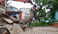 TP.HCM: Cây xanh ngã trước cổng trường học