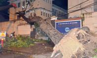 Cây cổ thụ ngã đè tường trường đại học Sài Gòn