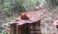 Rừng bị phá nằm 'sát nách' trạm bảo vệ rừng