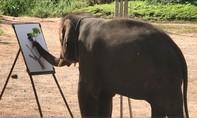 Xem voi vẽ tranh ở Chiang Mai