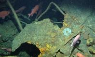 Úc tìm thấy tàu ngầm mất tích sau 103 năm