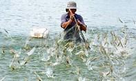 Bộ Công thương đề nghị Úc dỡ bỏ lệnh tạm ngừng nhập khẩu tôm