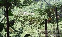 Tăng cường bảo vệ đàn voi