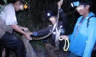 Theo chân thợ săn đêm dùng tay không bắt rắn, kỳ tôm giữa đại ngàn