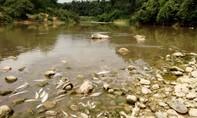 Cá tự nhiên lại chết trắng xác trên sông Âm