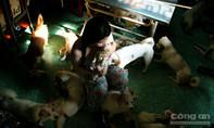 Người phụ nữ sống một mình, 22 năm qua nhận nuôi gần trăm con chó Nhật vô chủ