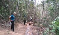 Kỷ luật 7 cán bộ bảo vệ rừng dựng chuyện lâm tặc cướp gỗ tang vật