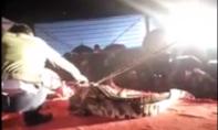 Cá sấu cắn vào đầu diễn viên xiếc trên sân khấu