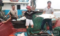 Ngư dân trúng mẻ cá bè vàng khoảng 5 tỷ đồng