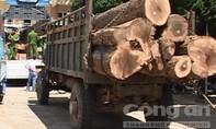 Bắt 2 ô tô chở 18m3 gỗ lậu trong đêm