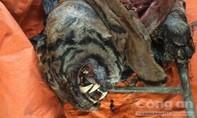 Bắt 5 cá thể hổ vằn đông lạnh tại nhà dân