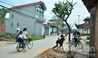 Người dân phẫn nộ khi cây xanh 'bỗng dưng' bị chặt hạ hàng loạt