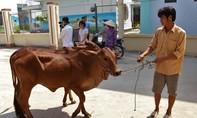 Masan Nutri-Science trao tặng 30 con bò giống cho người dân xã Lộc Giang, Long An