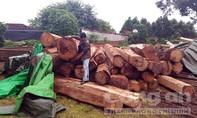 Khởi tố vụ án phá rừng tại khu vực biên giới